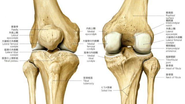 膝関節運動学