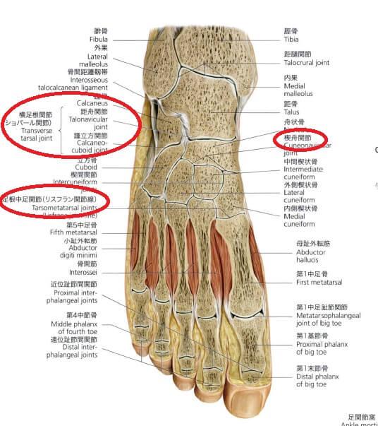 足部中足部