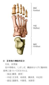 足部の種類