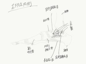 足関節内側の靭帯