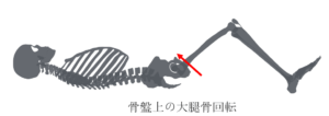 骨盤上の大腿骨回転