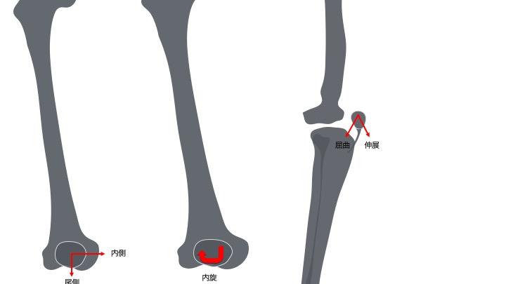 膝蓋骨の可動性